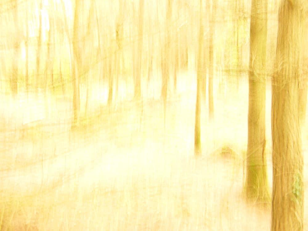© Copyright John Cleverton Photography 2019 HybridArtz.uk